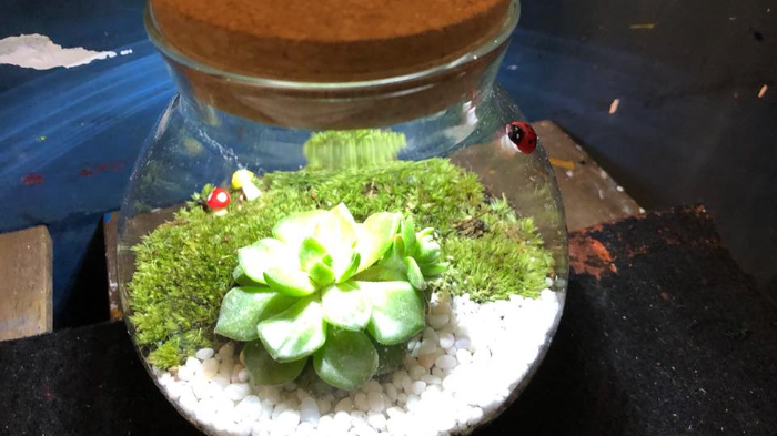 Go and Get Green with this Terrarium  Painting Workshop
